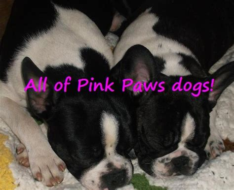 free puppies in chambersburg pa pink paws
