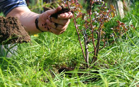 wann pflanzt wann pflanzt wann schneiden ansteht