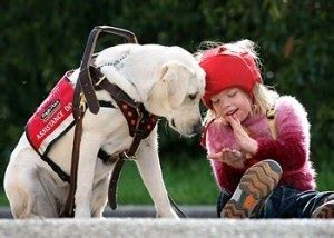 types of service dogs 8 types of service dogs we should be grateful for labs 2 rescue