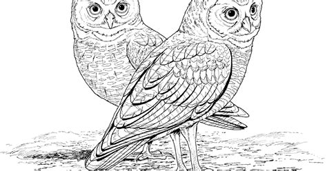 owl coloring pages to print barn owls