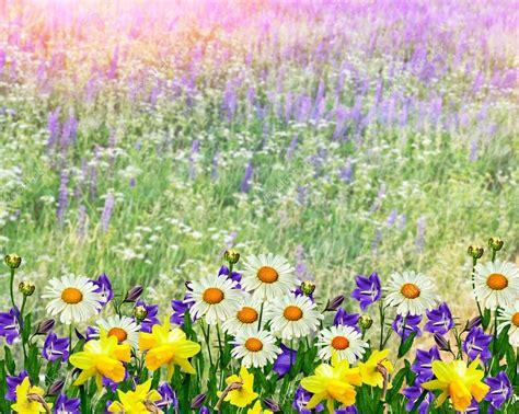 paesaggi di fiori paesaggio estivo con fiori di co foto stock