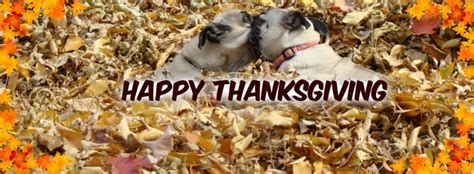 thanksgiving pug pictures 60 best pug covers images on cover photos pug and pug dogs