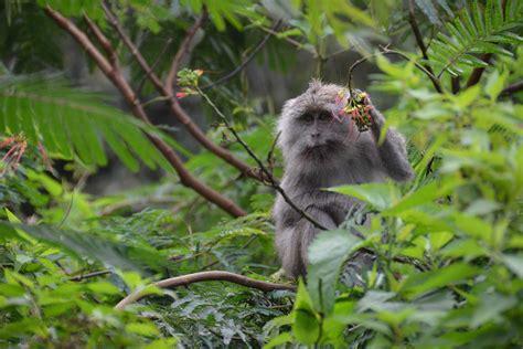indonesie itineraire  flores de labuan bajo  maumere