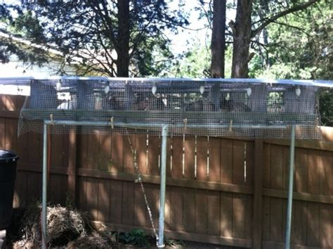 Backyard Quail by Backyard Quail Pens Backyard Quail