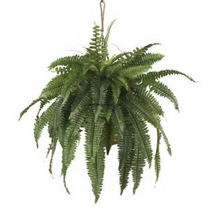 hanging plants 22 quot large boston fern silk plant w hanging basket