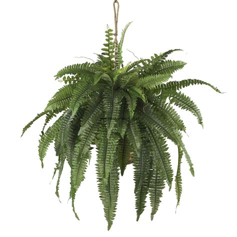 hanging plants 22 quot large boston fern silk plant w hanging basket