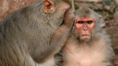Pictures Of Animal Behavior