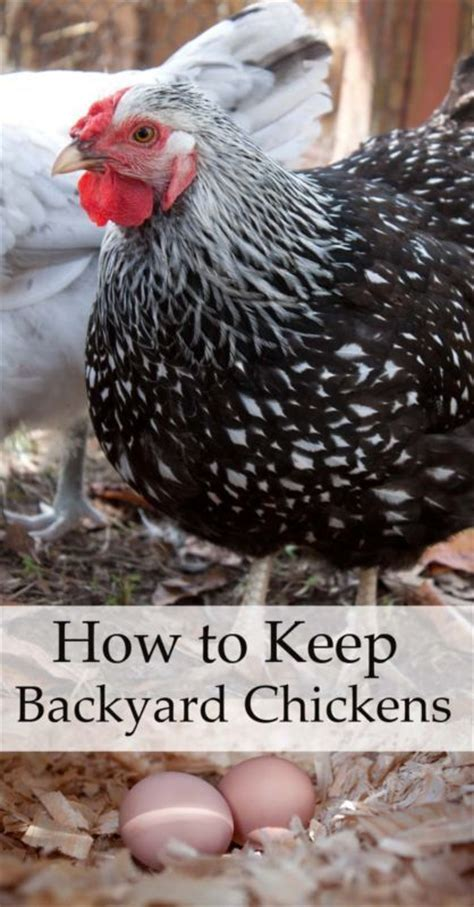 how to keep chickens in your backyard 1000 images about with chickens on chicken coop designs the chicken and a chicken