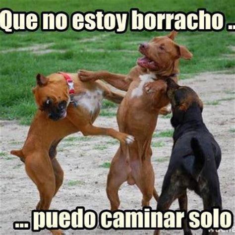 imagenes graciosas de borrachos crudos imagenes chistosas perro borracho