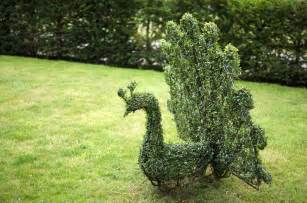 topiary animals bespoke topiary plant sculptures