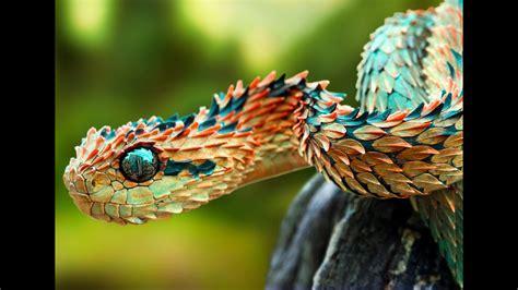 Animal World 5 top 10 rarest animals