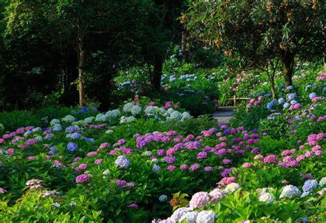 Country Farm House by 11 Beautiful Hydrangea Flowers Garden Lovers Club