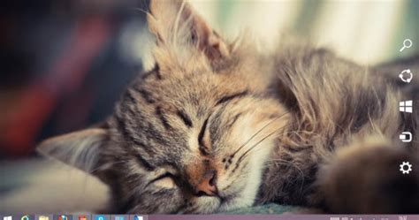 kitty kat themes sleepy cat theme for windows 7 and 8 8 1 ouo themes