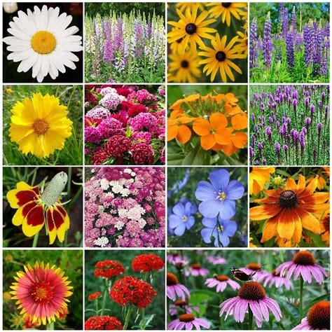 Flower Garden Seeds All Perennial Wildflower Seed Mix