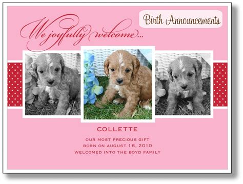 puppy announcement puppy announcements