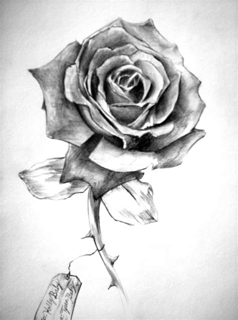 black and white rose tattoo pencil drawing with shading this image is more order