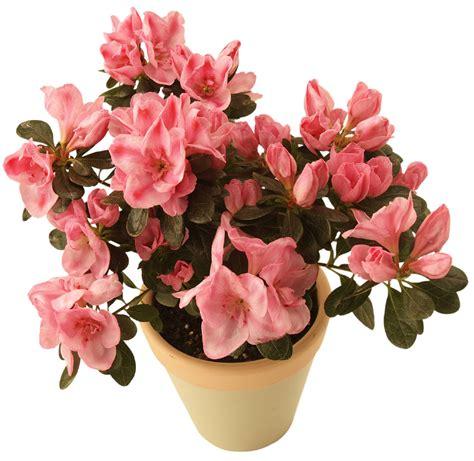 indoor flowers yubali indoor plants pictures
