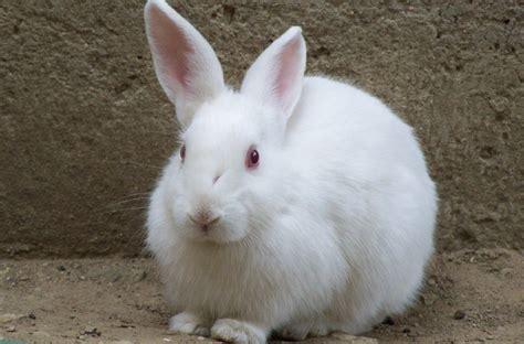 rabbits riots and the algorithmic gaze exeunt magazine