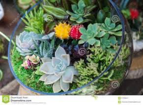 Black And White Flower Vase Terrarium With Cactus Succulent Plant Stock Photo Image