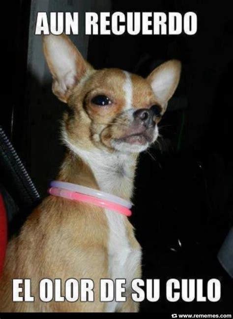 imagenes para whatsapp animales memes de perros graciosos con chistes muy divertidos