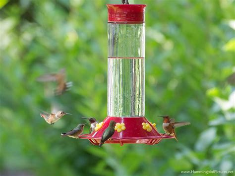 what do you put in a hummingbird feeder hummingbird