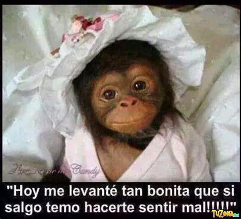 imagenes comicas de monos mejores 8 im 225 genes de monos chistosos en pinterest