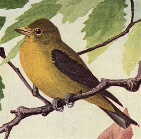 free vintage clip art yellow bird the graphics fairy