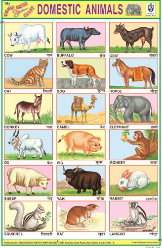 indian book depot sticker 10x14 chart buy domestic animals