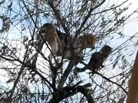 Doggie From Tree by Cat Stuck In Tree