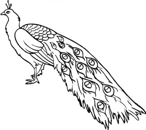 indian peacock coloring page peacock coloring pages bestofcoloring com
