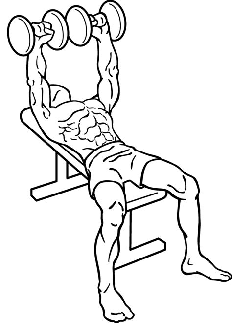 Bench Press Using Dumbbells by Dumbbell Bench Press Bicep Workouts