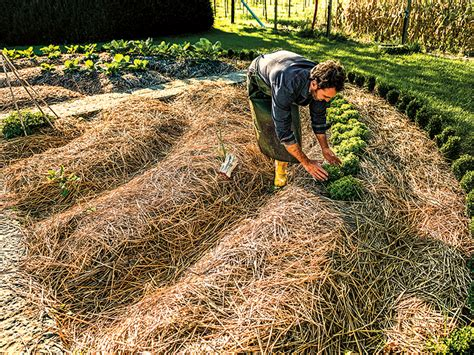 mulch mastery how to rev your garden