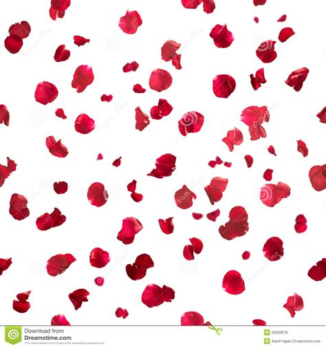 seamless rose petals stock photo image of pattern
