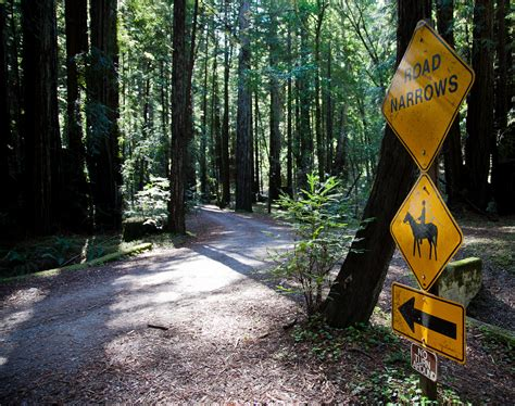 beautiful forests  california