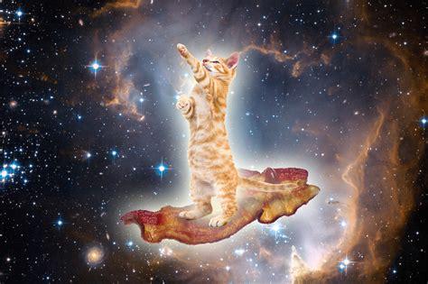wallpaper galaxy cat stylish wallpaper free download wallpaper dawallpaperz