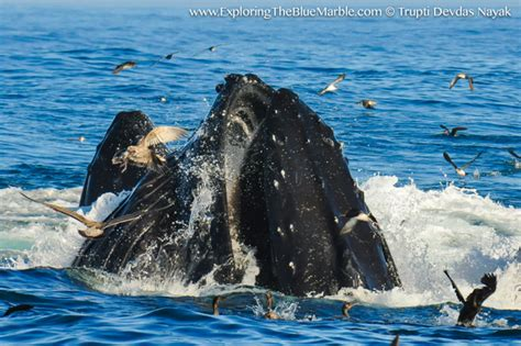 Orcas In Captivity Essay by Essay Whales