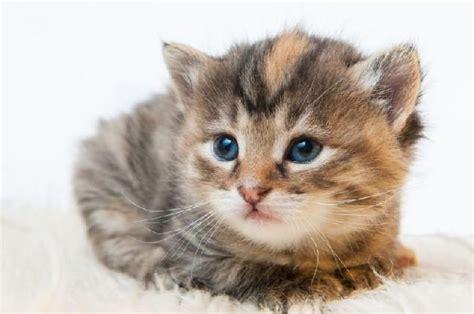 google imagenes de gatos gatos fofos pesquisa google cuties cats pinterest