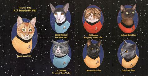 Kittens For Giveaway - giveaway win star trek cats trekmovie com