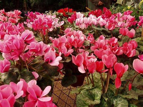 colore dei fiori significato colore rosa significato significato fiori significato