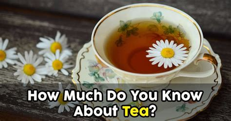 How Much Do You Lose On A Tea Detox by How Much Do You About Tea Quizpug