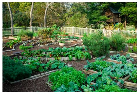 how to build a raised bed for vegetable gardening the