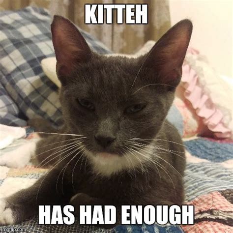 Annoyed Cat Meme - disgruntled kitty imgflip
