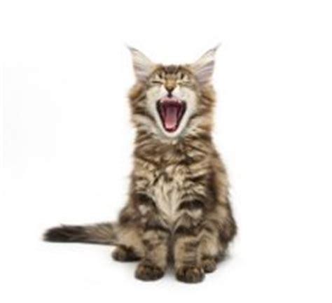 2 kittens in huis kitten in huis en nu kattenplaza