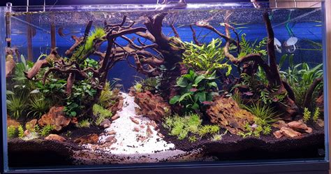 aquarium en aquascape voorbeelden aquariumopstartennl