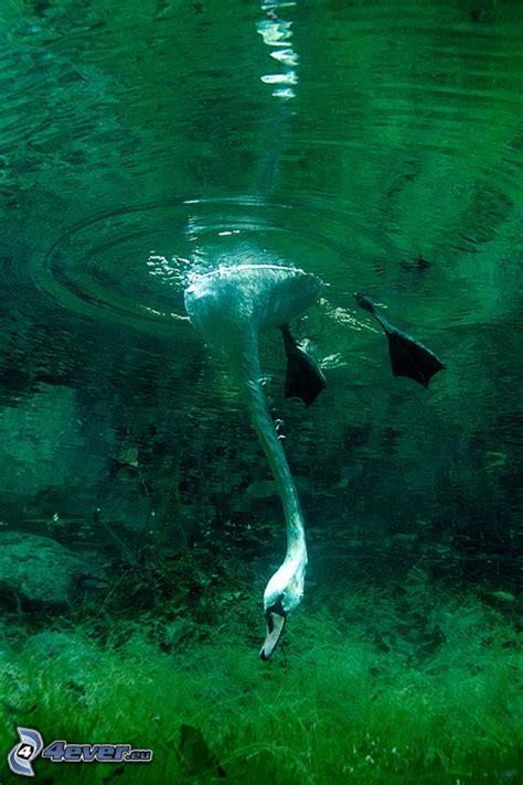 wohnung unter wasser nadar bajo el agua