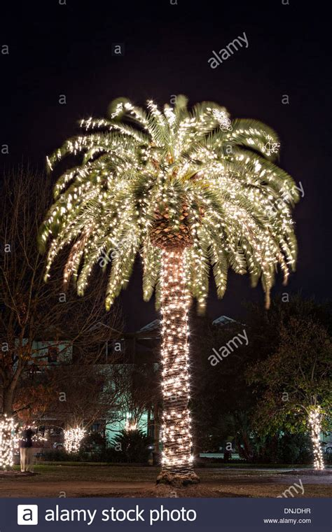 palm tree with christmas lights on marion square in