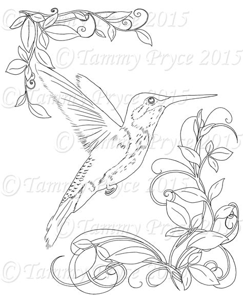 coloring pages for adults hummingbird adult hummingbird coloring pages printable sketch coloring