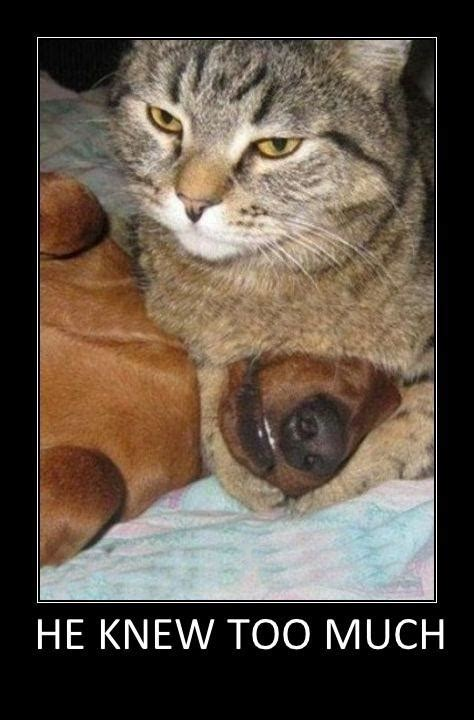 funny animal pictures funny pictures funny facebook photos funny jokes funny