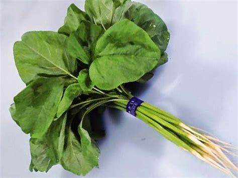 manfaat daun bayam bagi kesehatan tubuh manfaat daun obat