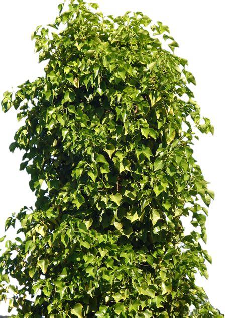 bush png by suicideomen on deviantart